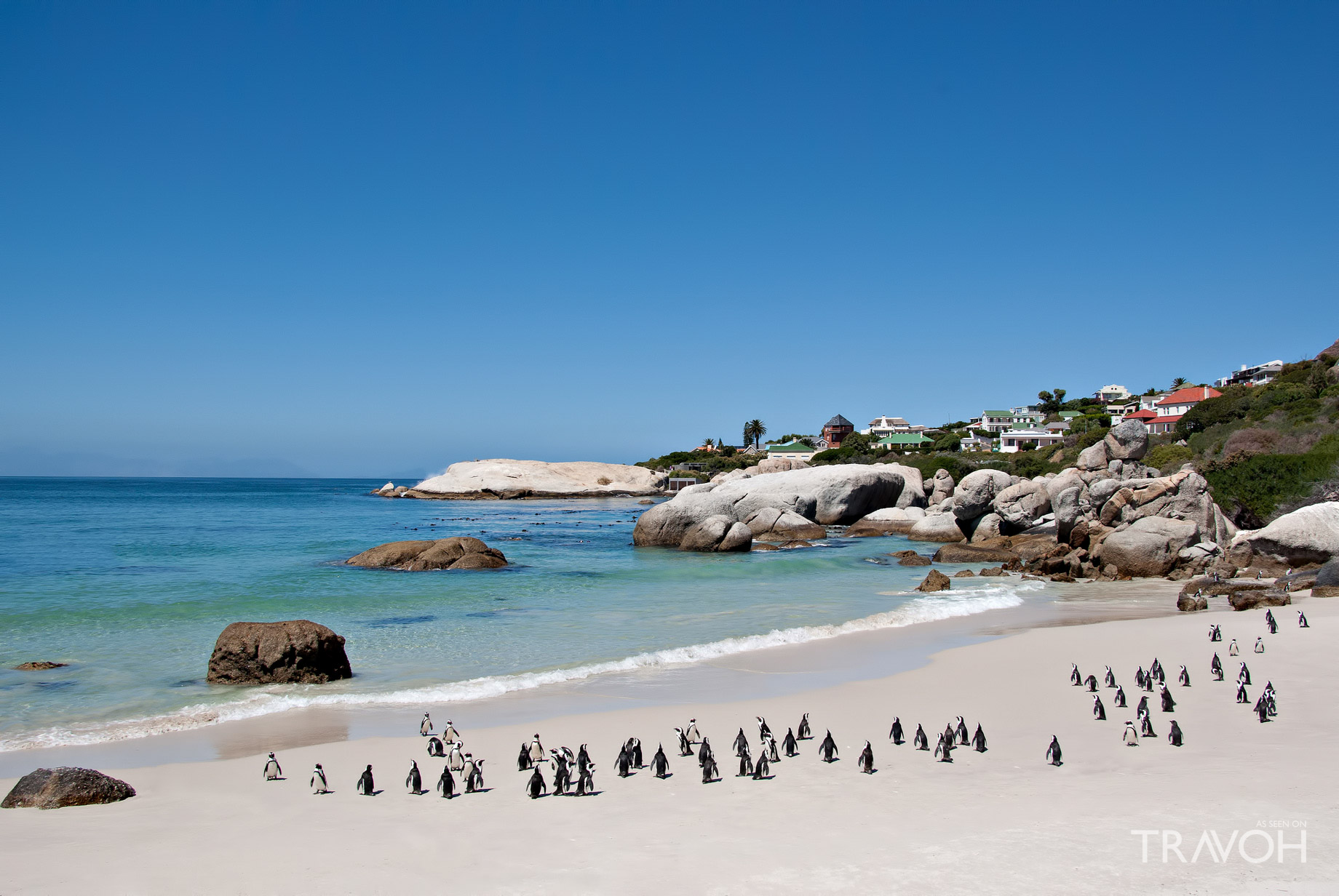 Boulders Beach - Exploring 10 of the Top Beaches in Cape Town South Africa