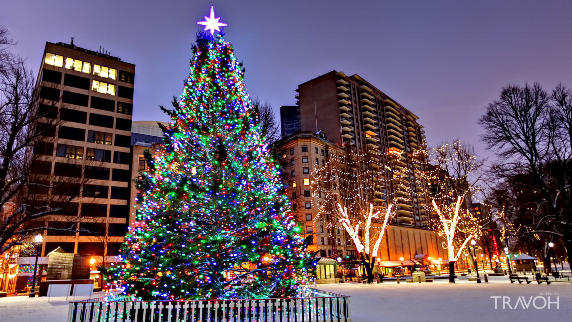 Visit the Boston Christmas Tree - 38 Beacon St, Boston, MA, USA
