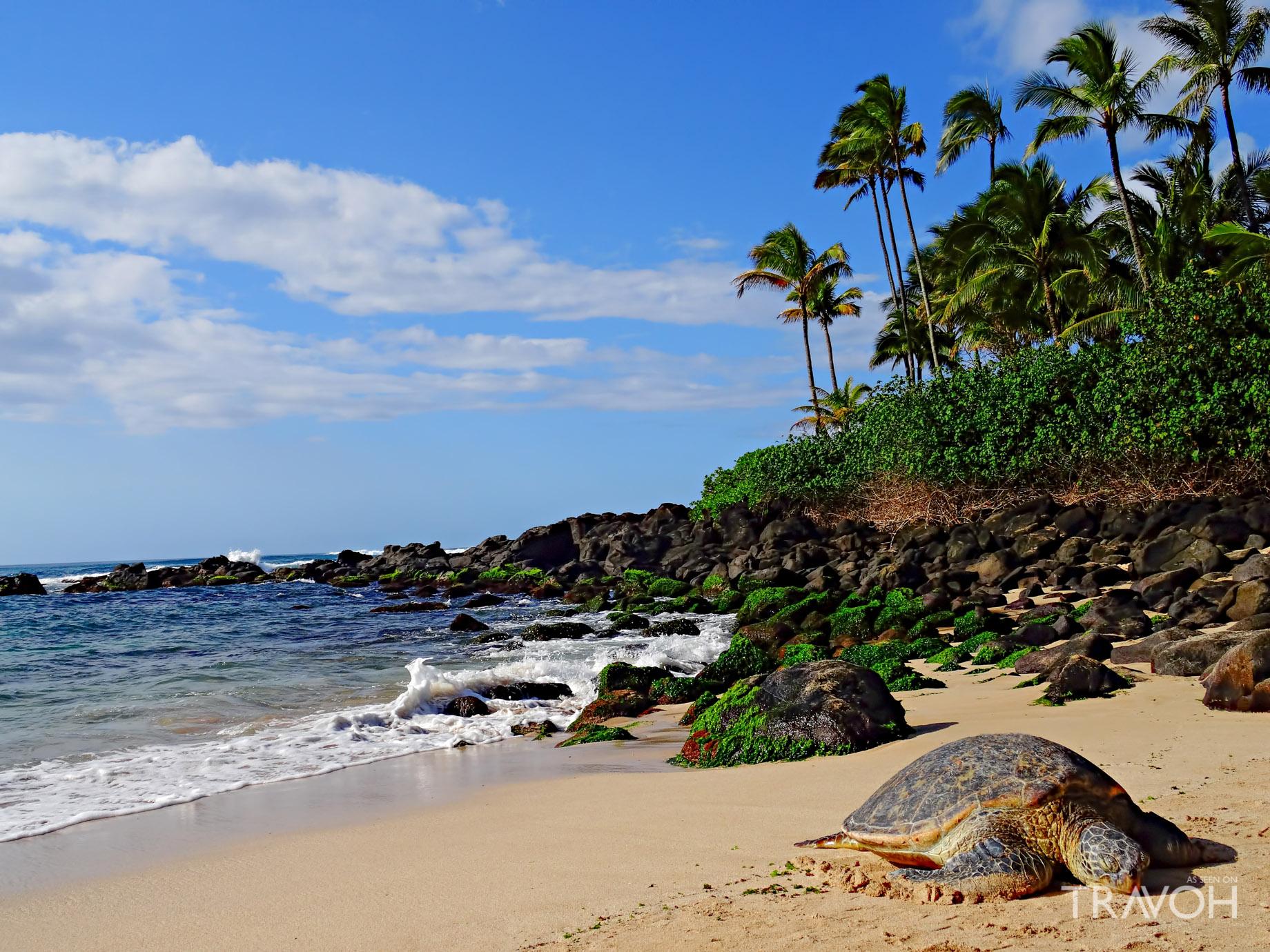 Laniakea (Turtle) Beach - Oahu, Hawaii