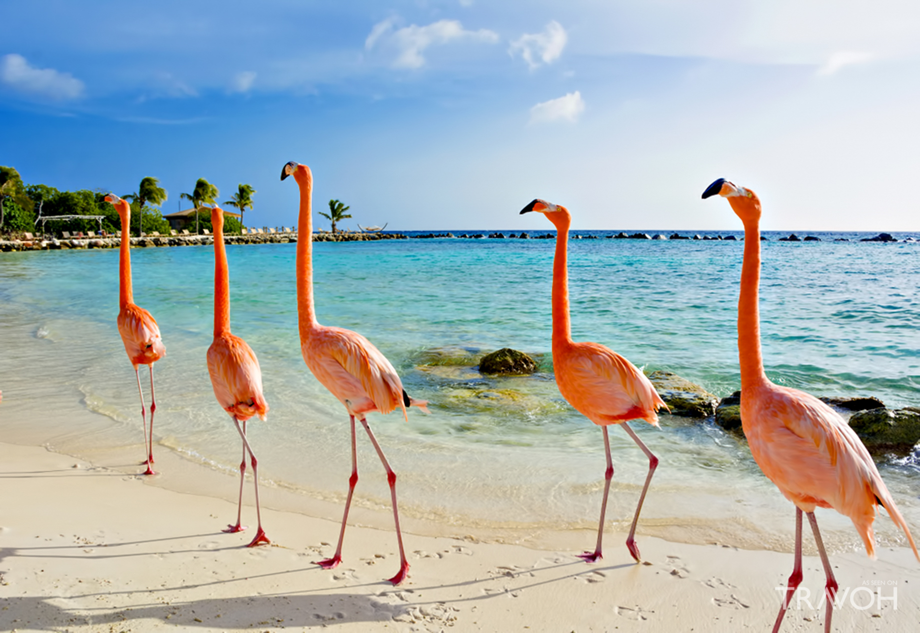 See the Pink Flamingos - Five Signature Experiences on an ABC Islands Caribbean Yacht Charter
