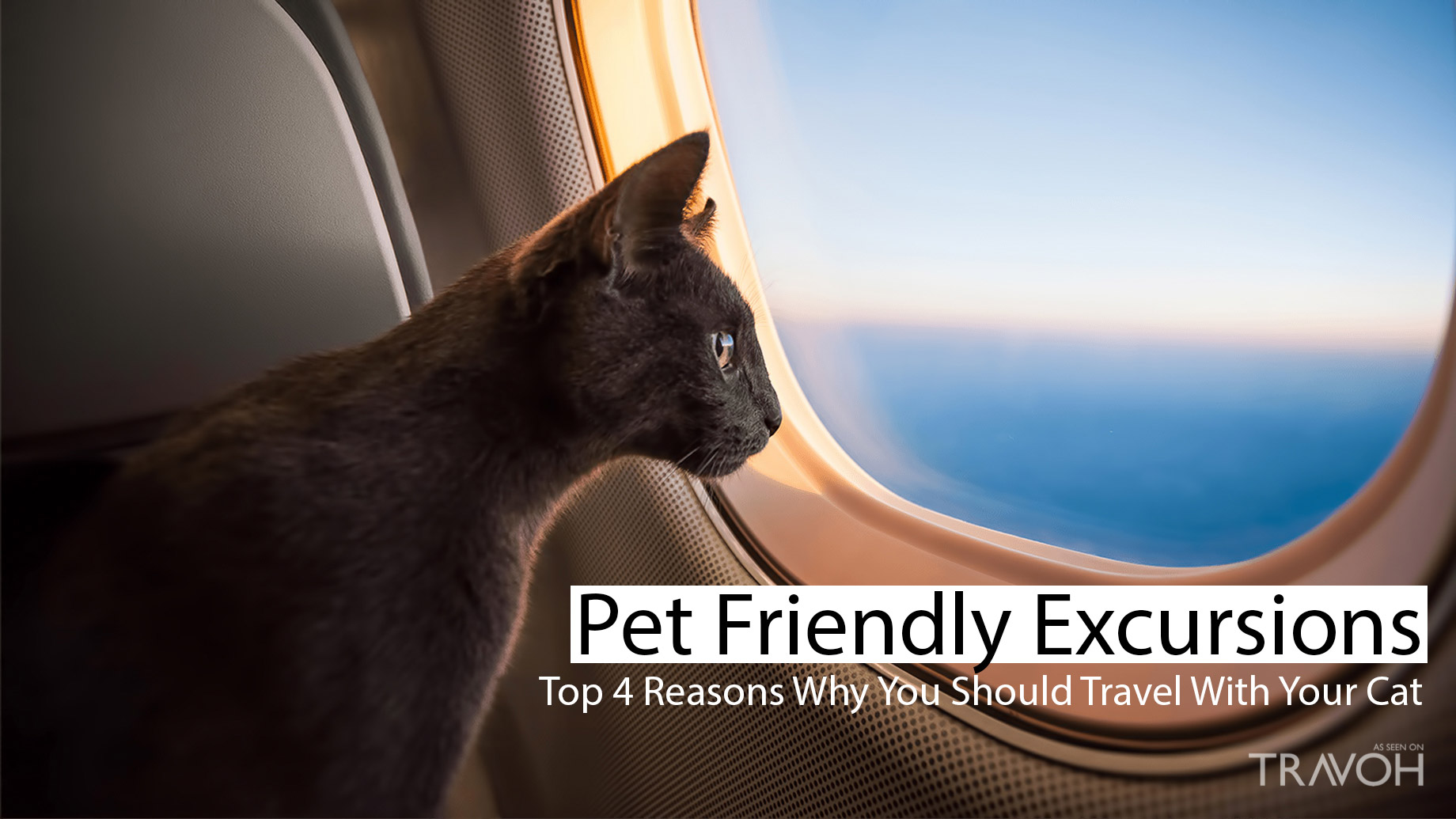 Pet-Friendly Excursions - Top 4 Reasons Why You Should Travel With Your Cat