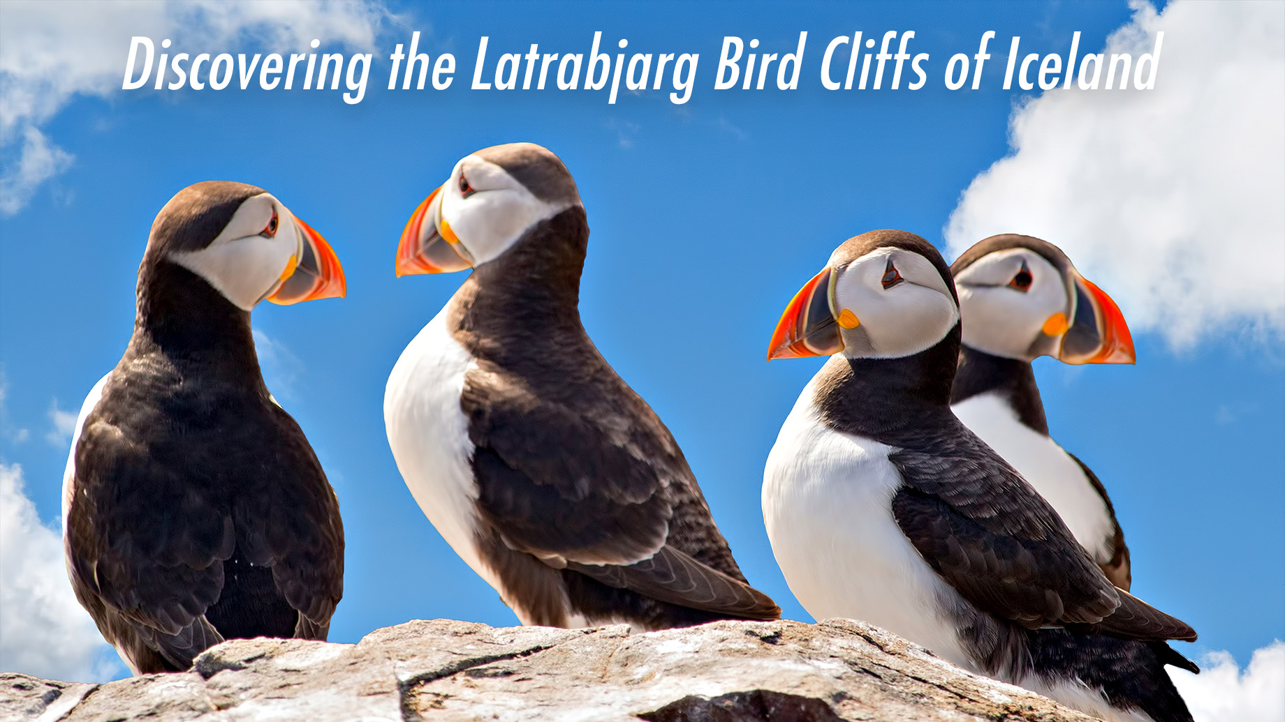 Travel Guide - Discovering the Latrabjarg Bird Cliffs of Iceland
