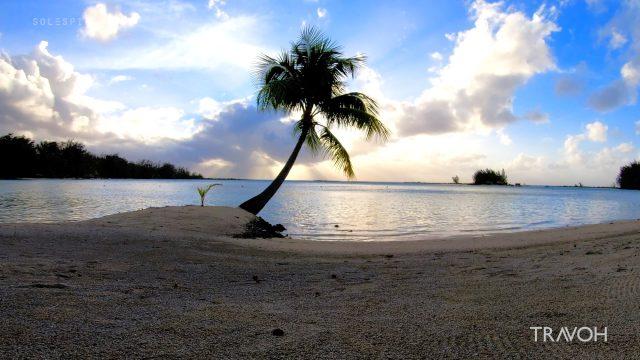 Calm Palm Tree Meditation - Ocean Beach Sunset - Motu Tane, Bora Bora, French Polynesia - 4K Travel Video